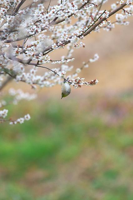 1d3_6529_mejiro