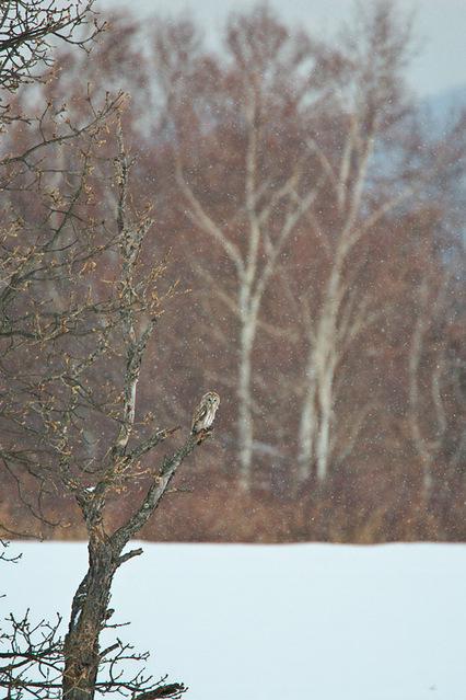 1d3_7183_owl