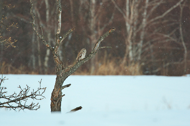 1d3_7202_owl
