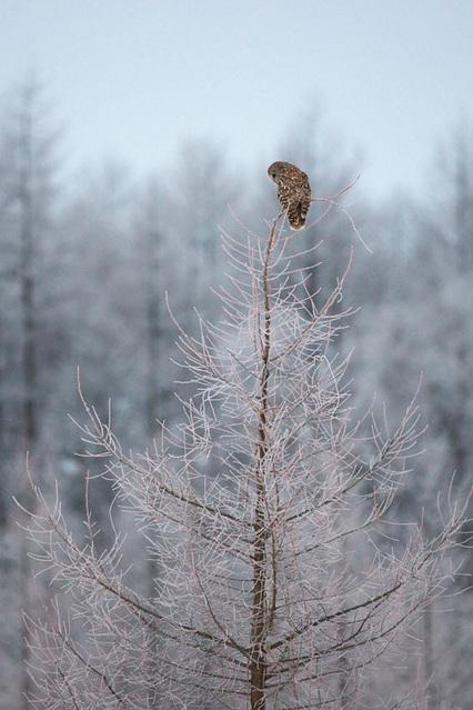 1d3_7275_owl