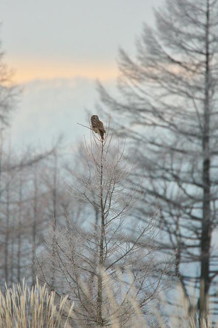 1d3_7350_owl