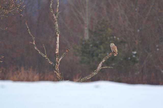 1d3_7433_owl