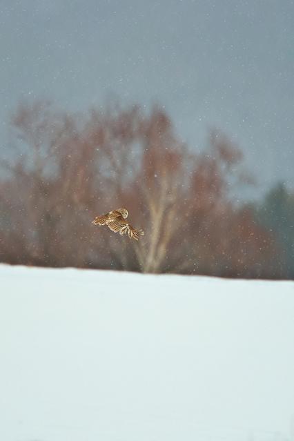 1d3_7196_owl