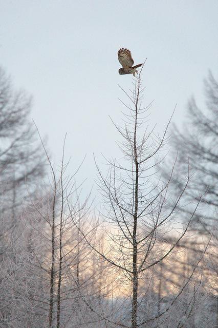 1d3_7342_owl